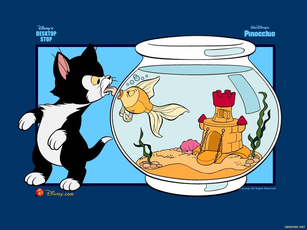 القطة والسمكة